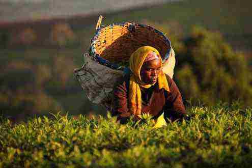 Vyhrajte balíček čiernych čajov od Liptonu