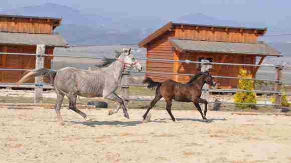 Vyhrajte a zažite jedinečný víkendový pobyt na Ranchi Amadeus v Turci