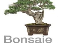 Ponorte sa do taja dávneho umenia zvaného Bonsaje