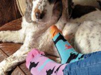 Súťažte o balenie 3 štýlových ponožiek Oddsocks!