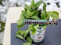 Súťažte o 3 balíčky Mentos Choco Mint v sume 15 eur