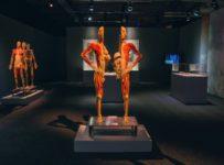 Neváhajte a hrajte o 2 lístky na jedinečnú výstavu Body the Exhibition