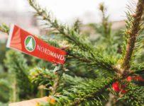 Vianočná súťaž o exkluzívne stromčeky Nordmander
