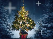 Vyhrajte 30x vianočný stromček v kvetináči